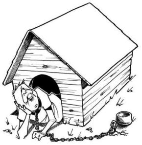 man-in-doghouse
